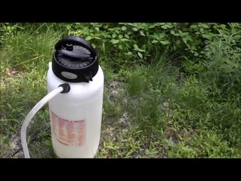 How to kill Pokeweed, Japanese Knotweed, and Bamboo