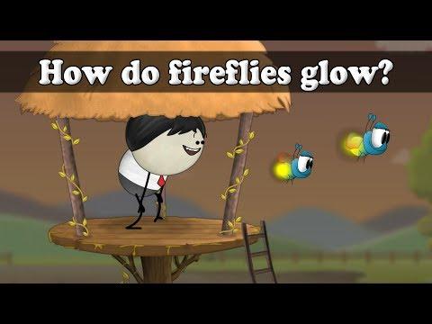 How do fireflies glow?   It's AumSum Time