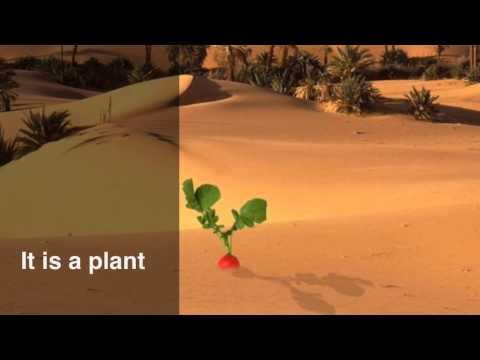 Anna's Deserts  Habitat