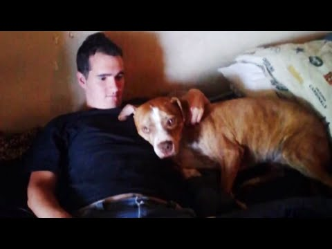 Delta Airlines Loses Man's Dog | TODAY