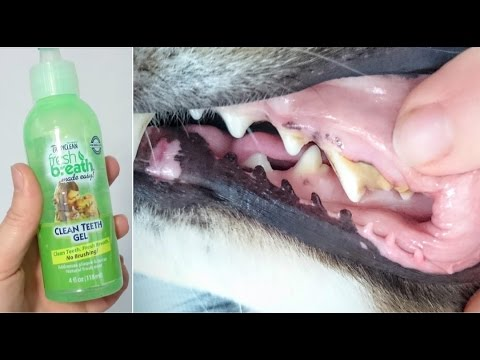 Tropiclean Fresh Breath Dog Teeth Cleaning Gel Review