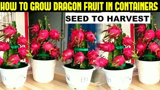 How To Grow Dragon Fruit   FULL INFORMATION
