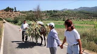 """Kosinë fshati me njerëz të qeshur dhe me humor. """"Shqipëri të mori lumi që ditën kur vdiq merhumi""""😂"""