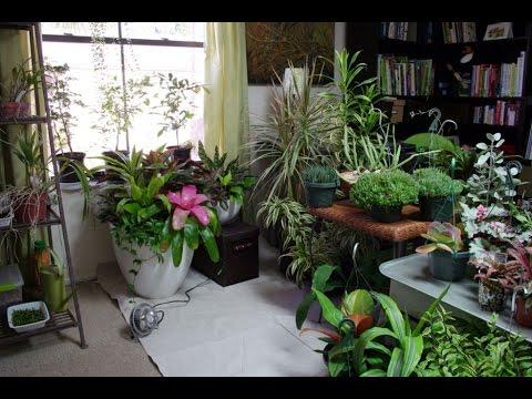 Garden | Indoor Herb Garden