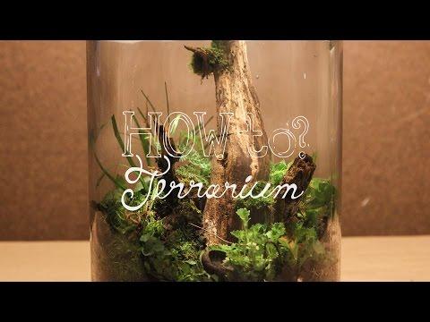 Make a Terrarium w/ Local Materials (Native Terrarium) - How To Terrarium ep.3