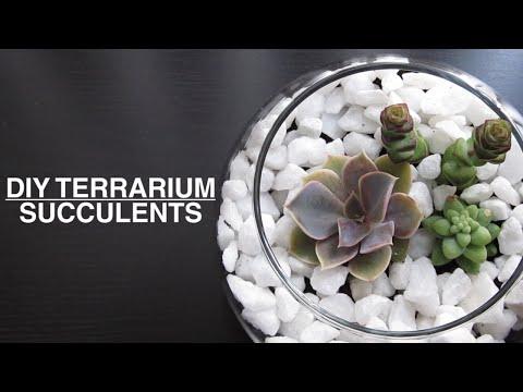 DIY : Succulent Plant Terrarium