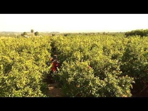 Spanish Citrus Video for Tesco