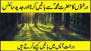 Latest Scientific Research On Tree - How Trees Talk to Each Other Urdu Hindi