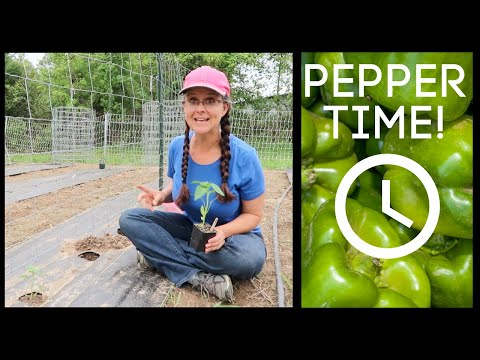 How to Plant Peppers and Our 2018 Pepper Choices!!!