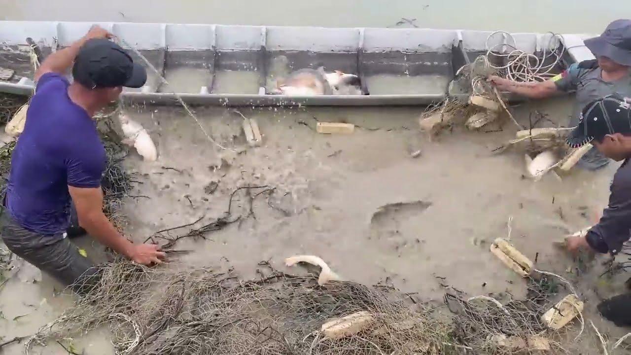 Unbelievable Fishermen Got DEFEATED by 100KG Giant Arowana