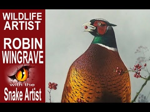 Interview with wildlife artist Robin Wingrave
