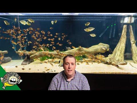 FISH ROOM UPDATE - 800 Gallon Aquarium