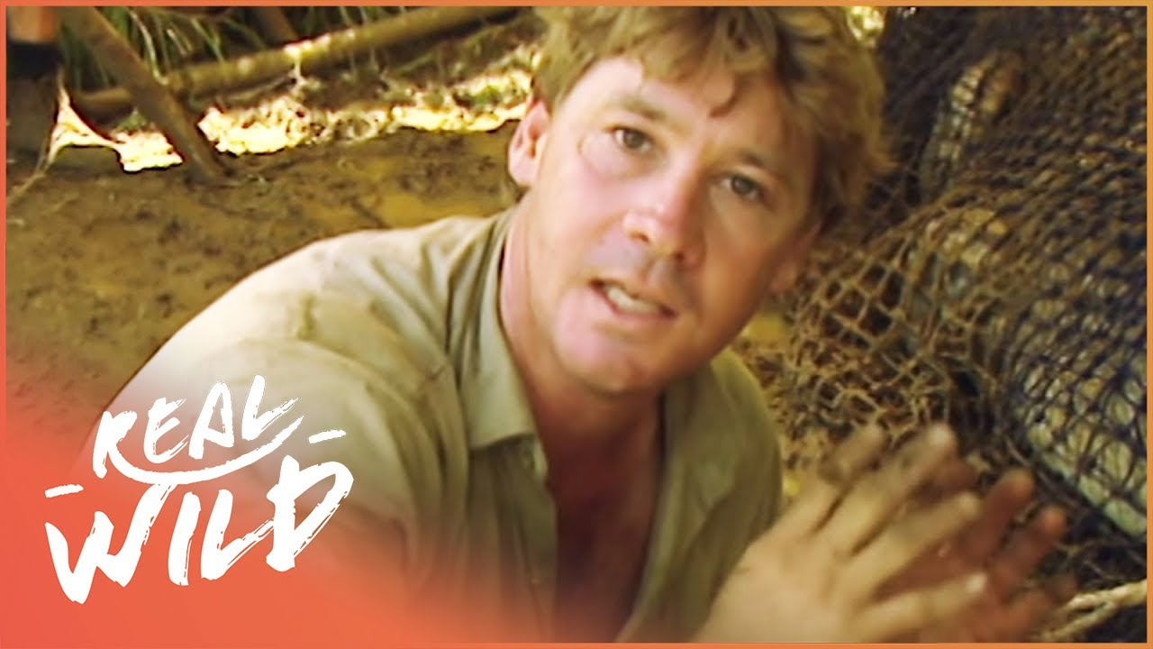 Steve Irwin's Biggest Crocodile Battles (Wildlife Documentary) | Real Wild