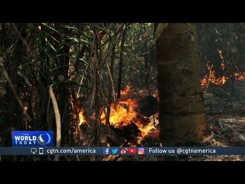 Deforestation in Brazil threatens worlds biggest rainforest