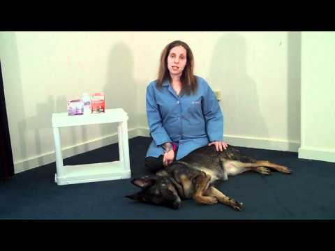 Intestinal Parasites in Dogs