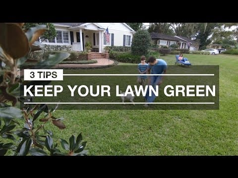 Lawn Care for Greener Grass: 3 Quick Tips for Spring