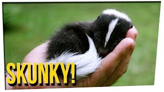 WEEKEND SCRAMBLE - Family Has Pet Skunk!  ft. Blogilates & DavidSoComedy