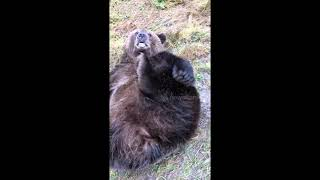 Russian man trusts pet bear so much he even puts his fingers in its mouth