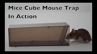 Mice Cube Mouse Trap In Action. The World
