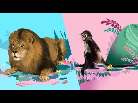 Download MP4 storybots animal songs music to learn for kids netflix jr