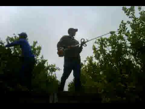 Pruning Lemon Trees - Husqavarna 323 - Pole Pruner - Paarl,South Africa - Youtube