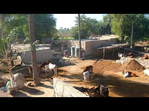 Real Punjab, Simple Pakistani Village Life New Heart Touching Videos