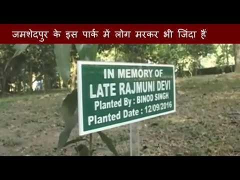 After the death of person family member planted a tree in a park