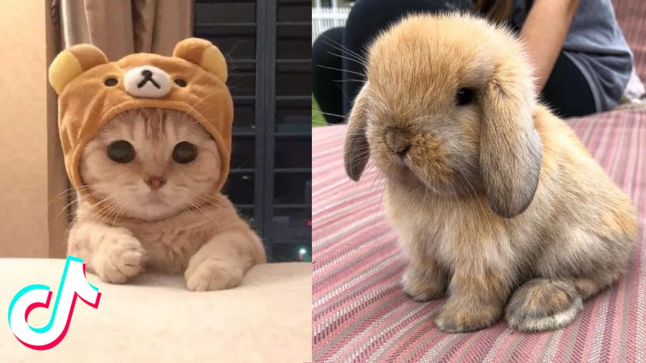 Cute TikTok Pets that Will Brighten Up Your Day 🥰