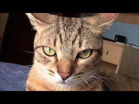 Green Eyes Cat (Gatto con occhi verdi)