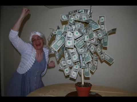 The Money Tree!