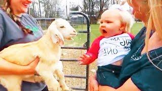 El momento más divertido entre Bebés Y Cabra 🤪🐐❤️ Compilación de bebés y animales divertidos