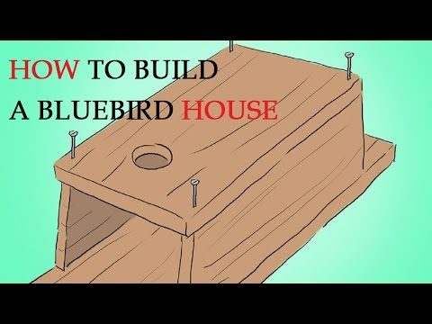 How to Build a Bluebird House