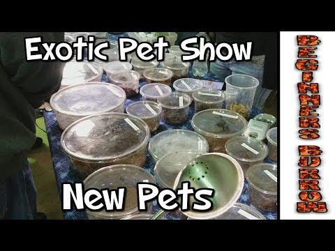 Tarantula Expo / New pets - Beginners Burrow