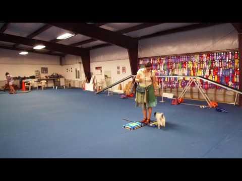 Hestia's platform training: week 4