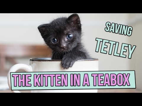 Saving Tetley, the Tiny Kitten in a Teabox