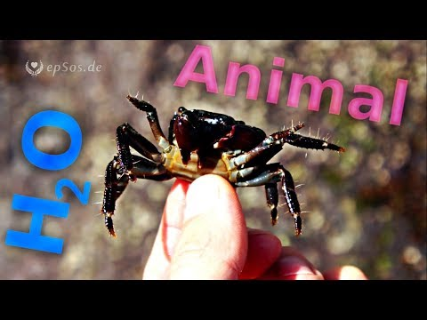 Sea animals and other creatures.