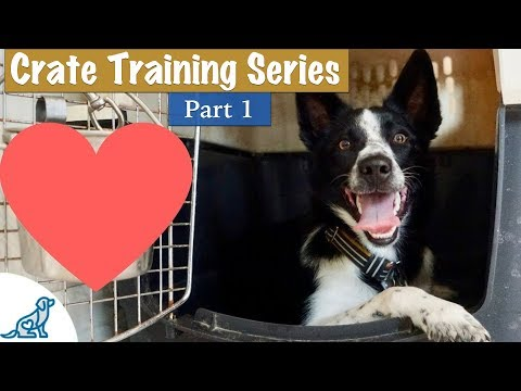 Crate Training A Puppy (So They LOVE Their Crate)