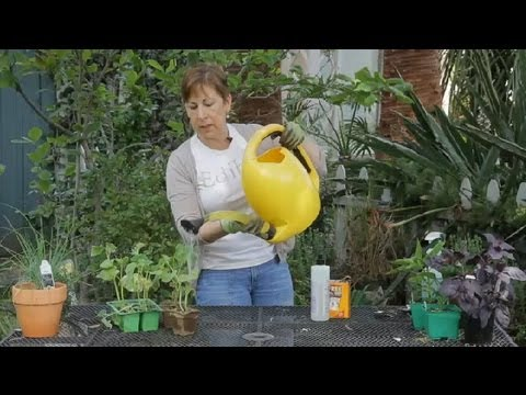How to Make a Fungicide for Powdery Mildew on Organic Cucumbers : Garden Space