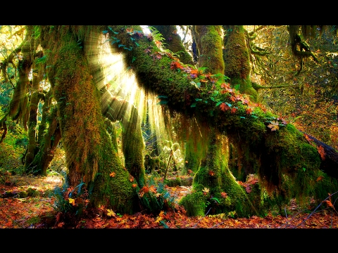 Healing in the Enchanted Forest   Binaural   Guided Meditation
