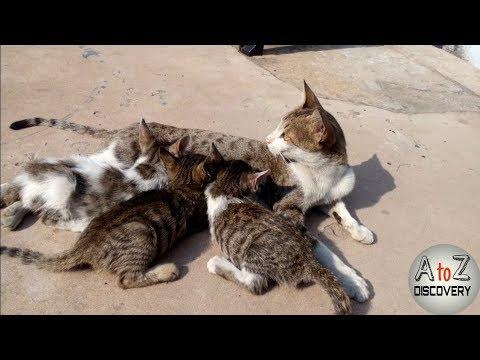 Mom Cat Feeding Her Cute Kittens / black and white cute kittens / Newborn Kittens