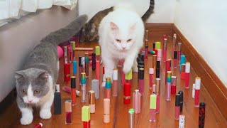 Cats vs Obstacle Course Compilation