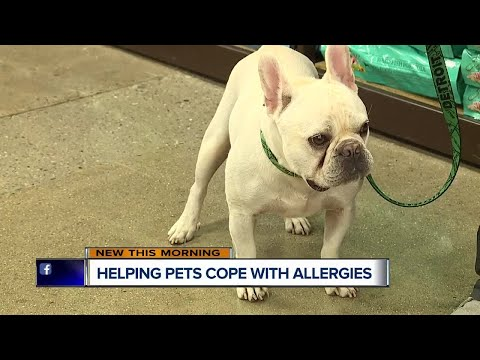 Helping pets cope with allergies