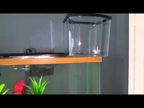 Glass vs plastic aquarium fish tank