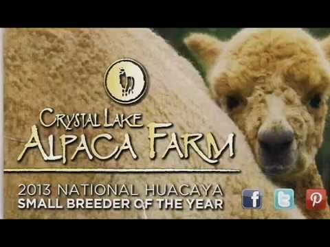 Crystal Lake Alpaca Farm of Frankfort, Michigan