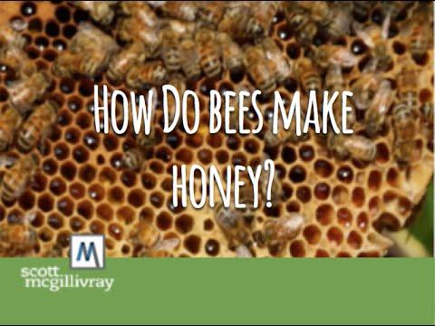 How Do Bees Make Honey?