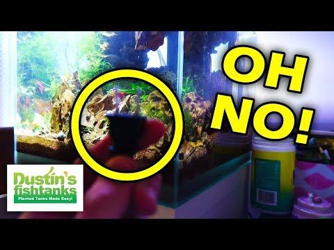 DISASTER AVOIDED! Aquarium Filter Not Working