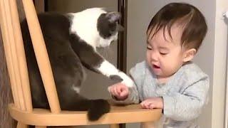Los gatos mas chistosos, videos para morir de la risa! El momento más divertido entre bebés y gatos