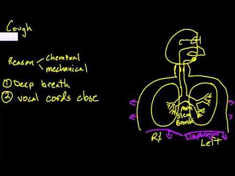 Cough mechanics 1 - AS practice