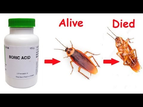 How To Get Rid of Cockroaches From Your Home Forever