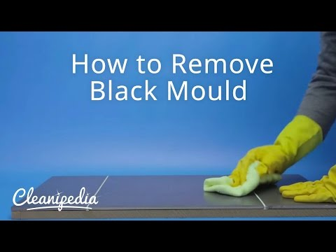 How to Remove Black Mould